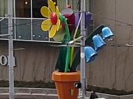 Seattle Flower